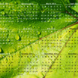 2011 calendar on green vine leaf — Stock Photo