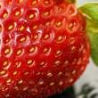 Beautiful strawberry macro — Stock Photo