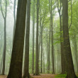 Misty forest — Stock Photo