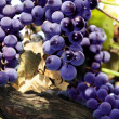 Stock Photo: Red grape cluster