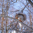 The squirrel on a tree. — Stock Photo #4200934