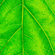 Stock Photo: Leaf closeup