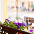 Royalty-Free Stock Photo: Flowers on balcony