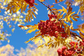 Autumn memories — Stock Photo