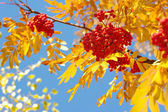 Beauty Autumn — Stock Photo