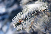 Frosty Christmas morning — Stock Photo