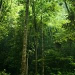 Forest sunlight — Stock Photo #4403927