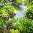 Tropical Garden - Stock fotografie