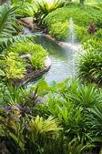 Tropisk trädgård — Stockfoto