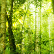 Forest sunlight — Stock Photo #4964444