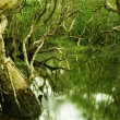 Tree in water — Stock fotografie