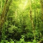 Rain forest — Stock Photo