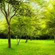 Green trees in park — Stock Photo #5170779