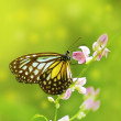 Butterfly — Stock Photo #5170797