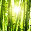 Bamboo forest — Stock Photo #5170802