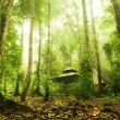 Green forest — Stock Photo