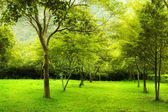 Green trees in park — Foto Stock