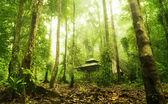 Grön skog — Stockfoto