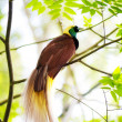 Stock Photo: Bird Of Paradise