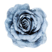 Blue fabrics rose — Stock Photo