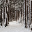 Stock Photo: Snow-clad lane in winter wood