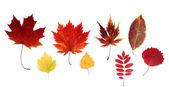 Dry autumn sheet — Stock Photo