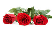 Three red roses — Stock Photo