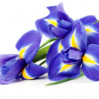 Iris bouquet — Stock Photo