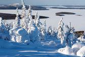 árvores na neve — Fotografia Stock