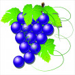 Black grapes VECTOR — Stock Vector
