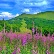 Stock Photo: Spring in mountains
