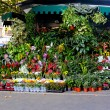 Stock Photo: Flower shop