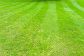 Grass field lines — Stock Photo
