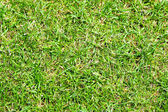 Grass pattern — Stock Photo