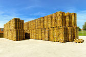 Euro pallets — Stock Photo