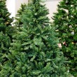 Christmas tree — Stock Photo #4274681