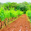 Wine plantation — Stock Photo #4654456