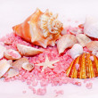 Summer shells — Stock Photo