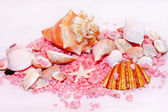 Summer shells — Stockfoto