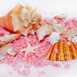 Shell decor — Stock Photo