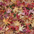 Autumn leafs — Stock Photo #4963180