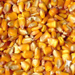 Corn kernels — Stock Photo #4963269