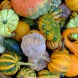 Miniature pumpkins — Stock Photo