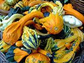 Bunch of pumpkins — Stock Photo