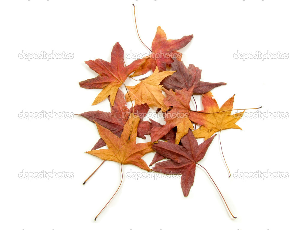 Bunch of red and yellow autumns leaves  Stock Photo #4963025