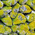 Moss wall — Stock Photo #5101361