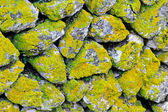 Moss wall — Stock Photo