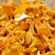 Chanterelles — Stock Photo #5337896