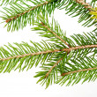 Branch of the Christmas tree — Stock Photo #4322125
