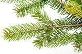 Tak van de kerstboom — Stockfoto